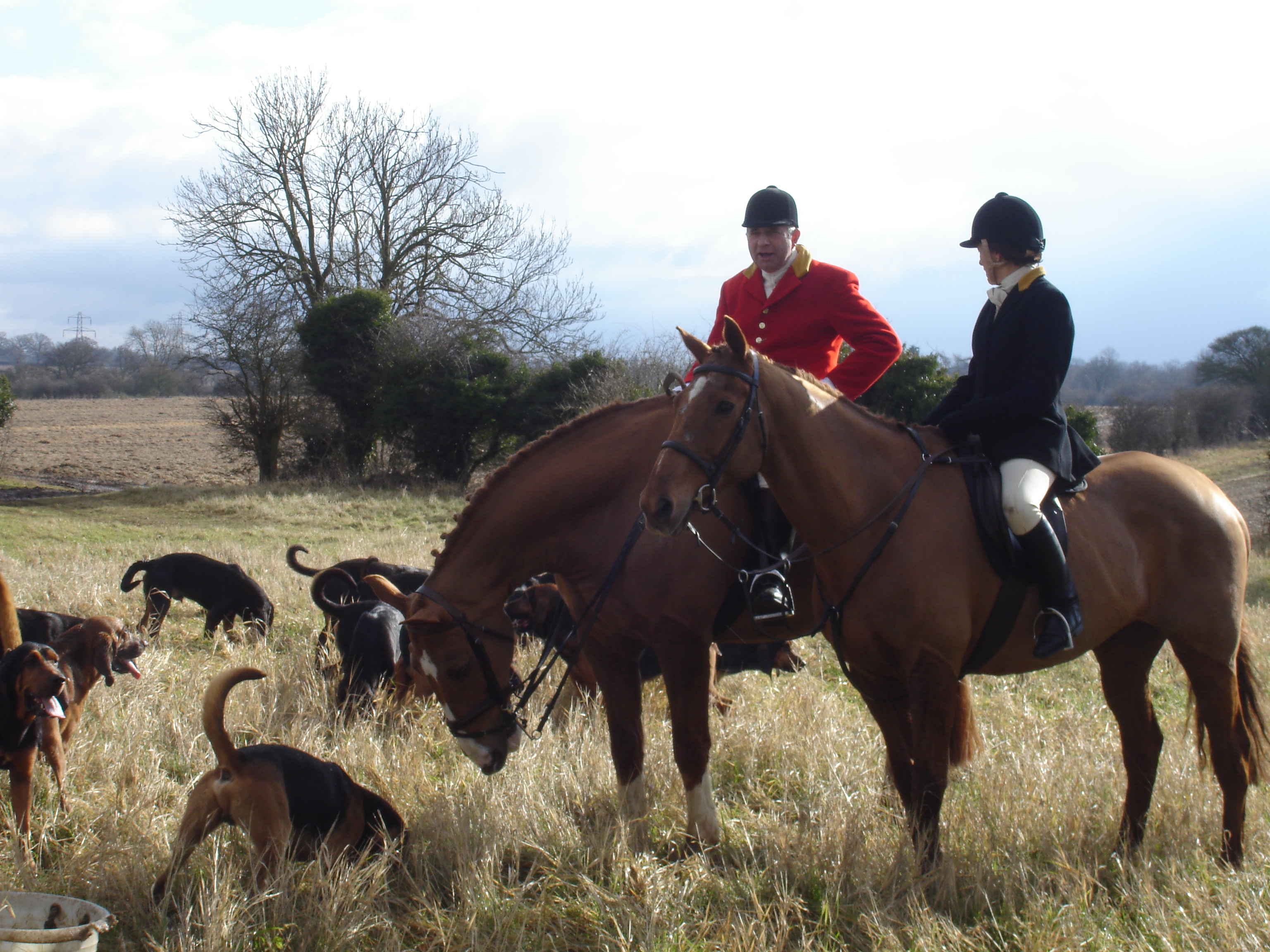 Horses And Hounds Dog Grooming