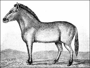 """Dzungarian wild horse"" imagined in Popular Science Monthly, vol. 37, 1890. Wikimedia Commons."