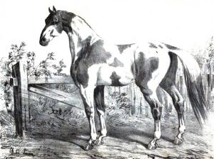 F Joseph Cardini: Dictionnaire d'hippiatrique et d'équitation, ouvrage où se trouvent réunies toutes les connaissances hippiques. Paris, Bouchard-Huzard, 1848. (Wikicommons)