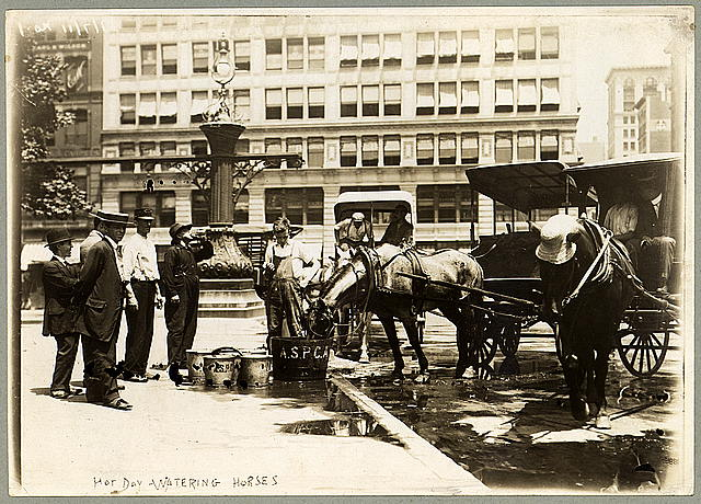 Street-cab horses drinking from half-barrel of water provided by the A.S.P.C.A. George Grantham Bain Collection (Library of Congress).