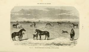 la_connaissance_generale_du_cheval_page_48_fig-_35_bhl17109396