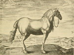 the_origin_and_influence_of_the_thoroughbred_horse_1905_14594208559