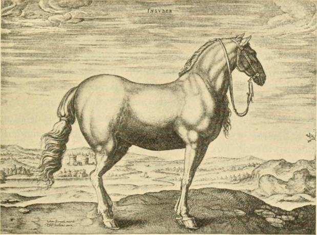 Phlegmatic Greys and Woman-Killing Horses – Equine Coat Colour Theory