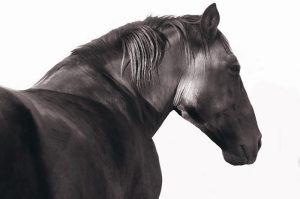 horse-sforrest-800x533
