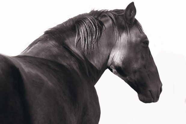 From Anarchy to Mare's Milk: a year in horsestories